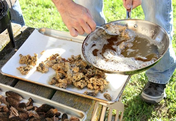 Morel Mushroom Fry